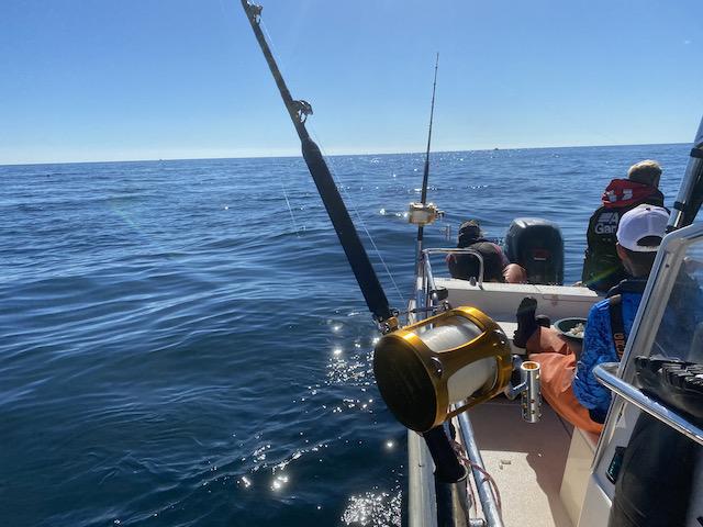 Forskningsfiske blåfenad tonfisk